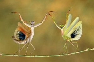 insect wire walkers