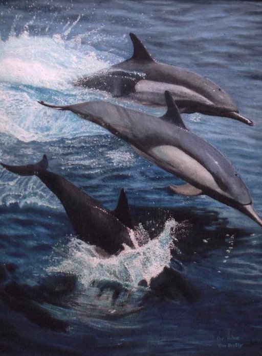 Dolphins – oils